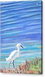 Snowy Egret At Sanibel Island Acrylic Print