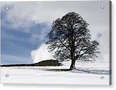 Snowy Field And Tree Acrylic Print by John Short