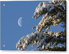 Snowy Moon Acrylic Print by Larry Landolfi