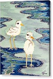 Snowy Plover Chicks Acrylic Print by Alexandra  Sanders