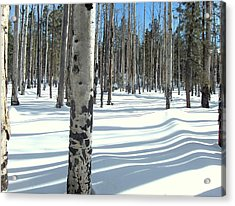 Snowy Shadows Acrylic Print
