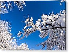Snowy Trees And Blue Sky Acrylic Print