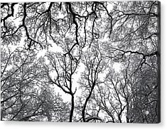 Snowy  Trees Acrylic Print by Richard Newstead