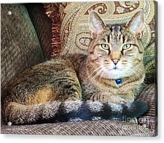 Snugs In Camoflage Acrylic Print by Judy Via-Wolff