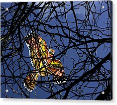Soar  Acrylic Print by Andrew Kubica