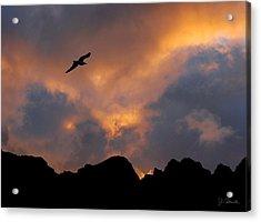 Soaring In The Midnight Sun Acrylic Print by Joe Bonita