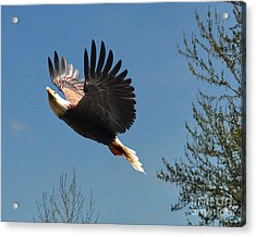 Acrylic Print featuring the photograph Soaring by Jack Moskovita