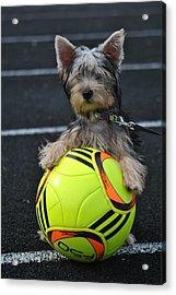 Soccer Dog Acrylic Print by Dawn Moreland