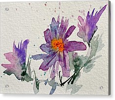 Soft Asters Acrylic Print by Beverley Harper Tinsley