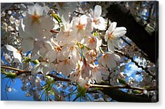 Soft Flowers Acrylic Print by Lee Yang