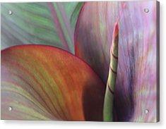 Soft Focus Petal Acrylic Print