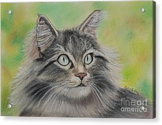 Soft Kitty Acrylic Print by Julie Brugh Riffey