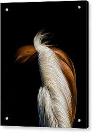 Soft N Silky Acrylic Print by Gary Smith