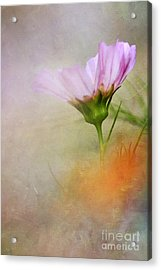 Soft Pastels Acrylic Print by Darren Fisher