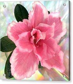 Soft Pink Azalea Acrylic Print by Terence Davis