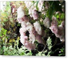 Soft Pink Acrylic Print by Lee Yang