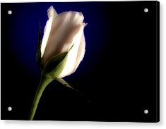 Soft Pink Rose Blue Background Acrylic Print by M K  Miller