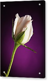 Soft Pink Rose On Deep Pink Background Acrylic Print by M K  Miller