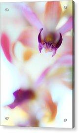 Soft Seduction. Orchids Acrylic Print by Jenny Rainbow
