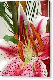 Softness Acrylic Print