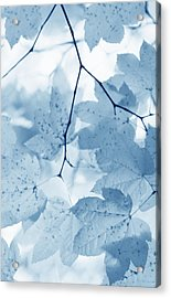 Softness Of Blue Leaves Acrylic Print by Jennie Marie Schell