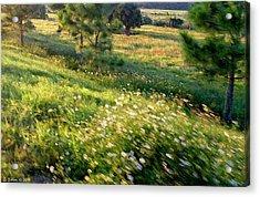 Sogno Campo Acrylic Print