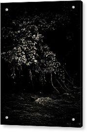 Solace Acrylic Print by Jessica Brawley