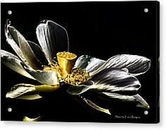 Acrylic Print featuring the photograph Solarized Lotus A by Travis Burgess