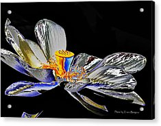 Acrylic Print featuring the photograph Solarized Lotus B by Travis Burgess