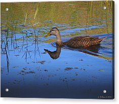 Solitary Duck In Autumn Acrylic Print