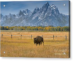 Solitary Moments Acrylic Print by Sandra Bronstein