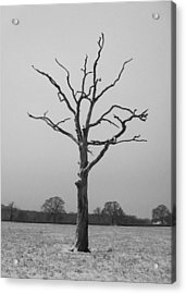 Solitude Acrylic Print by Michael Standen Smith