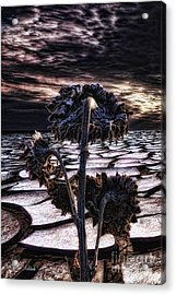Solitude Acrylic Print by Mo T