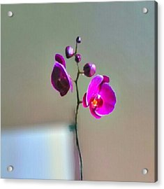 Some #flowers That Were Sent To My Wife Acrylic Print by Kel Hill