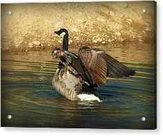 Something To Flap About Acrylic Print by Cindy Wright