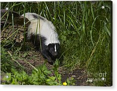 Something To Sniff At Acrylic Print by Sean Griffin