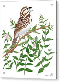 Acrylic Print featuring the digital art Song Sparrow by Walter Colvin