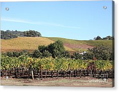 Sonoma Vineyards - Sonoma California - 5d19307 Acrylic Print by Wingsdomain Art and Photography