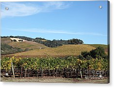 Sonoma Vineyards - Sonoma California - 5d19309 Acrylic Print by Wingsdomain Art and Photography