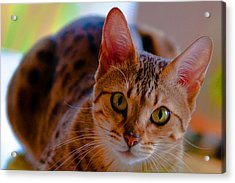 Sookie All Grown Up Acrylic Print by Frank Feliciano