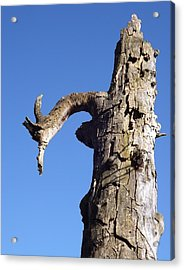 Acrylic Print featuring the photograph Soul Of The Wood Pecker by Gerald Strine