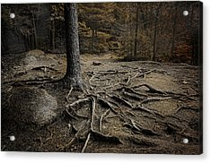 Soul Searching Acrylic Print by Robin-Lee Vieira