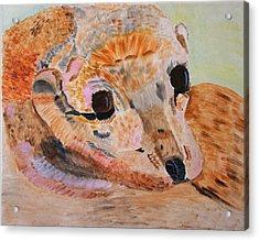 Soulful Eyes Of A California Sealion Acrylic Print by Meryl Goudey