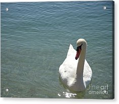 Soulmate One Acrylic Print by Laurence Oliver