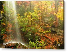 Sounds Of Autumn Acrylic Print by Darren Fisher