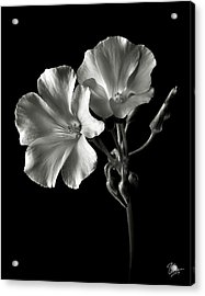 Sour Grass In Black And White Acrylic Print by Endre Balogh