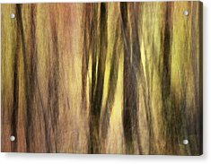 Sourwoods In Autumn Abstract Acrylic Print by Rob Travis