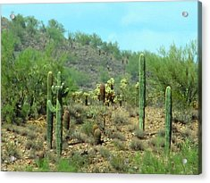 South West Desert Acrylic Print by David Killian