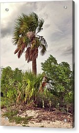 Southern Breeze Acrylic Print by Margaret Palmer