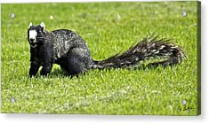 Southern Fox Squirrel Acrylic Print by Phill Doherty